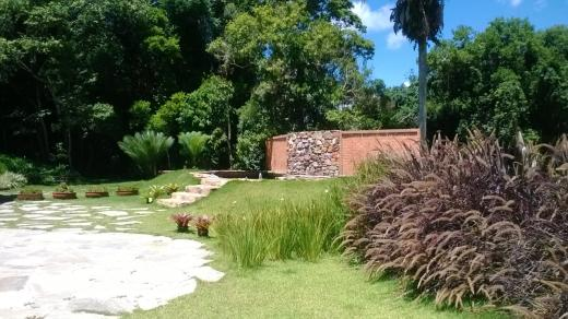 Plantas de fácil manutenção para Paisagismo Capins